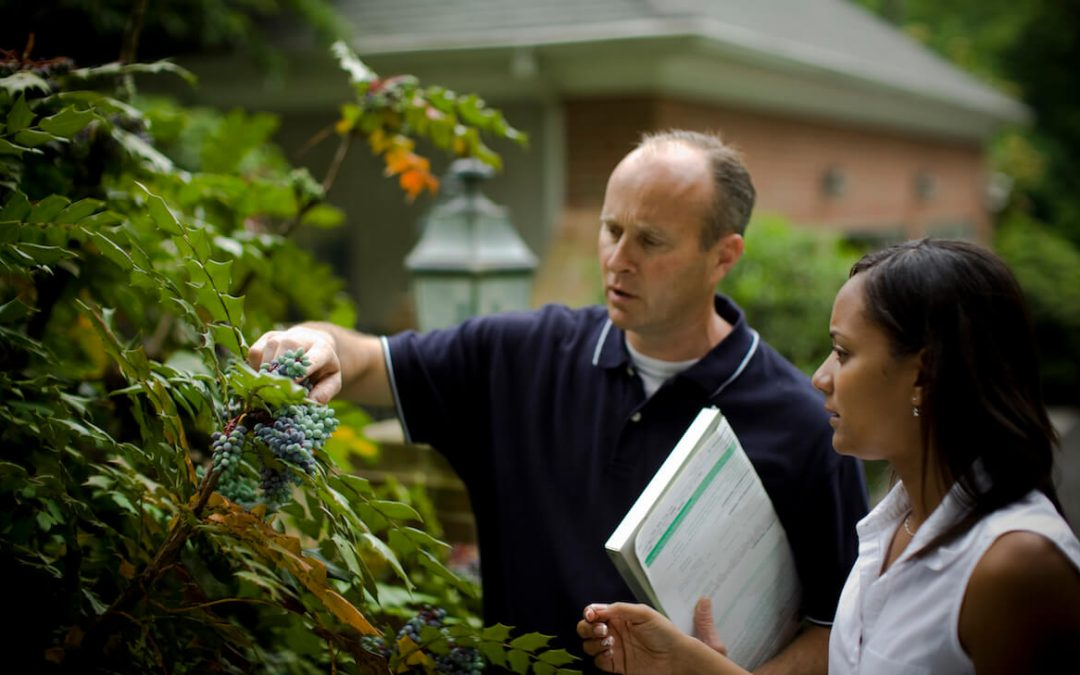 Tips to choose the best tree service
