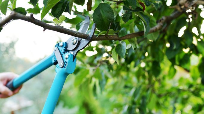 Reasons why you should prune your trees: