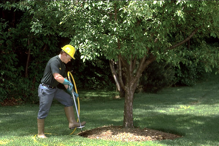All about fertilizing trees:
