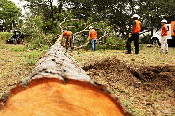 Tips to choose the best tree service | Mueller Tree Service