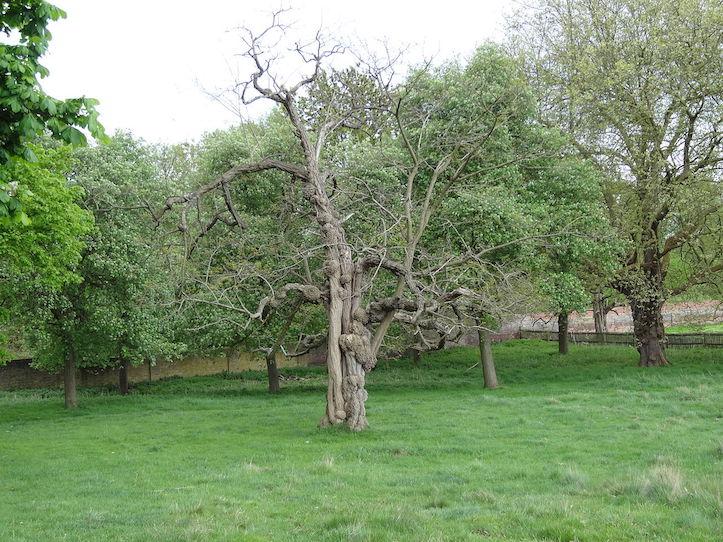 Dead tree in yard
